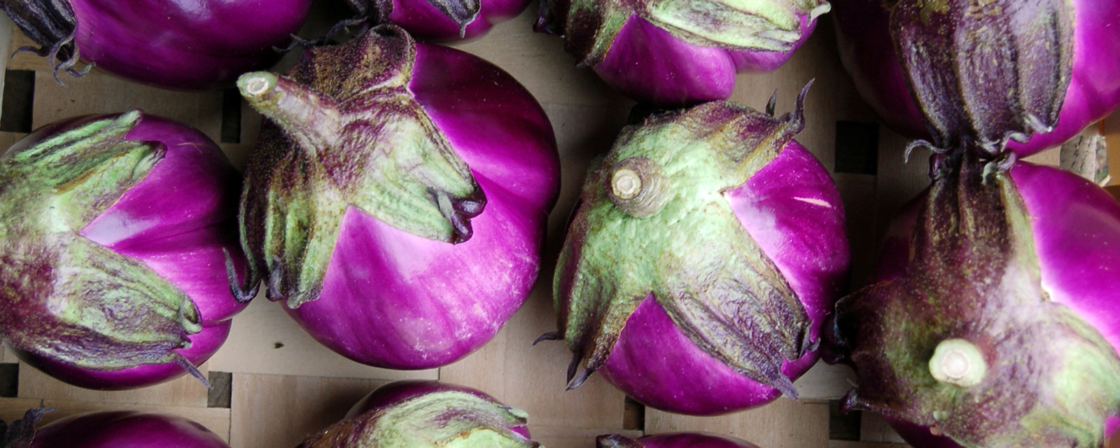 Eggplant from a farm in New Hampshire