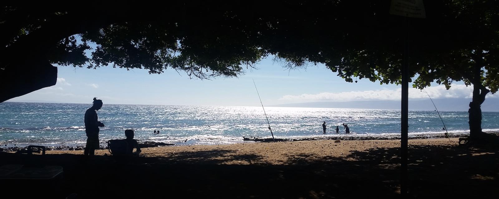 People fishing off a shady beach