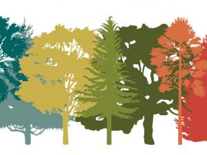 Colored drawing of different tree species
