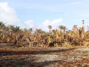 Dry, brown drought-stricken tropical vegetation