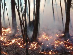 Controlled burn in the Klamath watershed