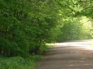 A picture of a forest road at Menominee