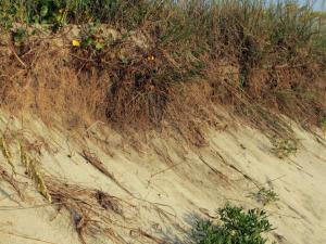 Beach erosion at Pea Island National Wildlife Refuge, North Carolina