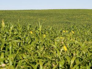 Cover Crop Diversity Working Toward Improving Soil Health in North Dakota
