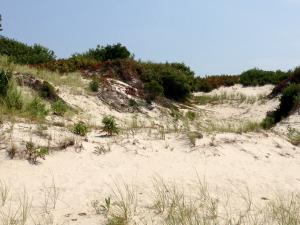 Dunes at Island Beach State Park