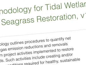 Screen capture from Methodology for Tidal Wetland and Seagrass Restoration