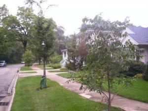 Newly planted neighborhood trees