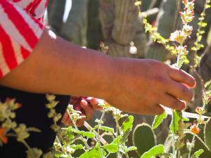 Woman examining a plant