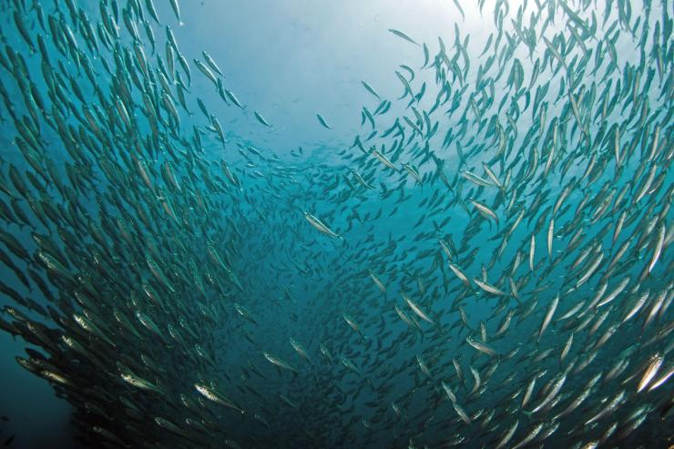 Underwater view of a school of fish split in center