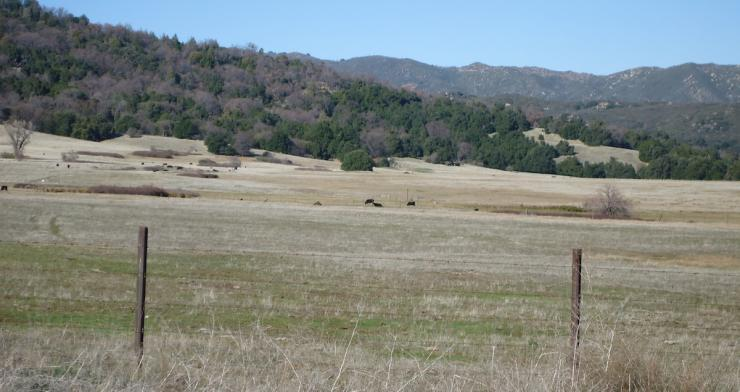 Photo of meadow in Dyche Valley, San Diego County, California