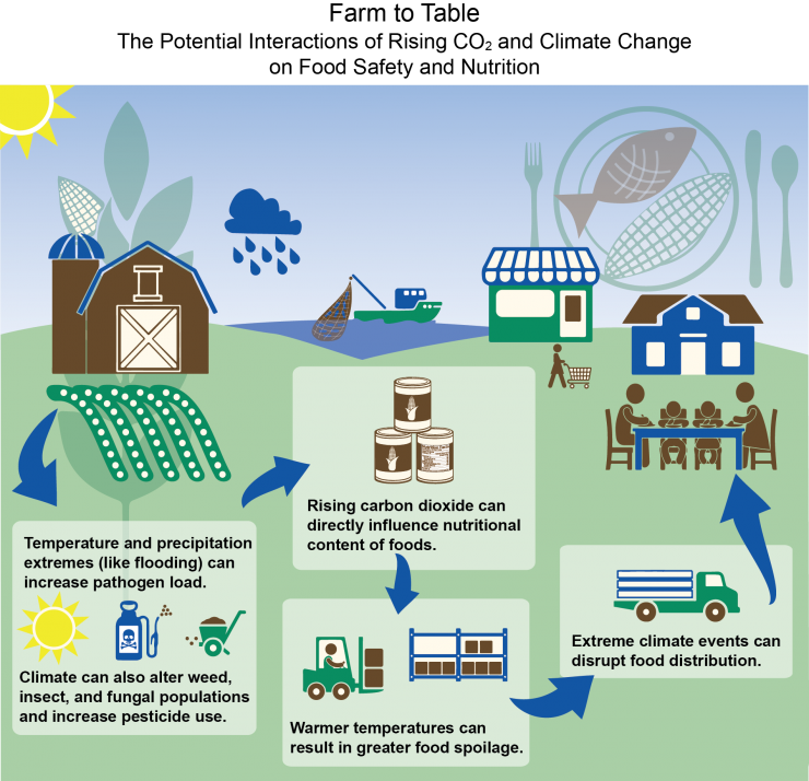 Infographic depicting potential Interactions of rising CO2 and climate change on food safety and nutrition