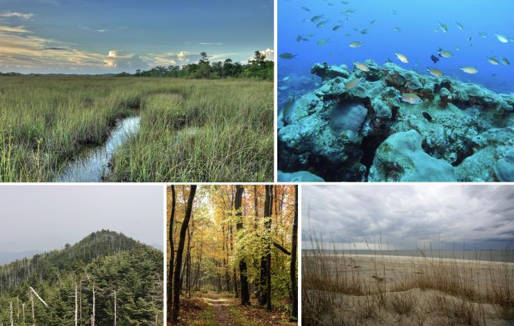 Montage of ecosystems in the Southeast