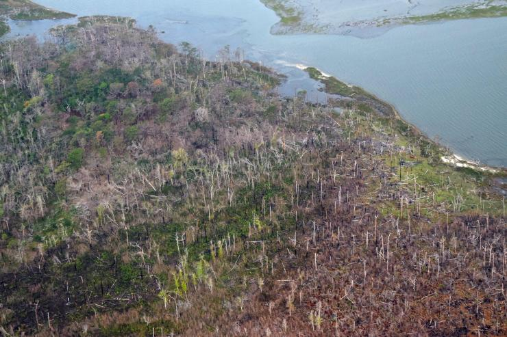 Aerial photo showing large expanse of dead trees along a coastline