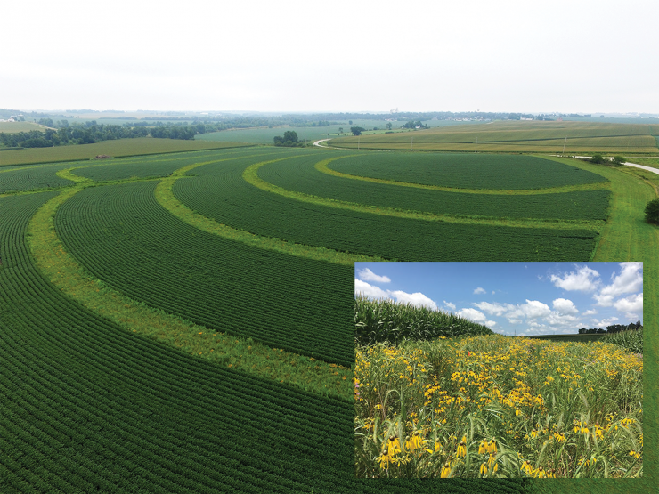 Photo showing the use of prairie strips, an agricultural conservation practice
