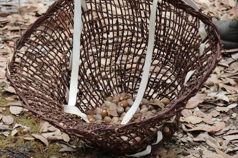 Woven basket holding acorns