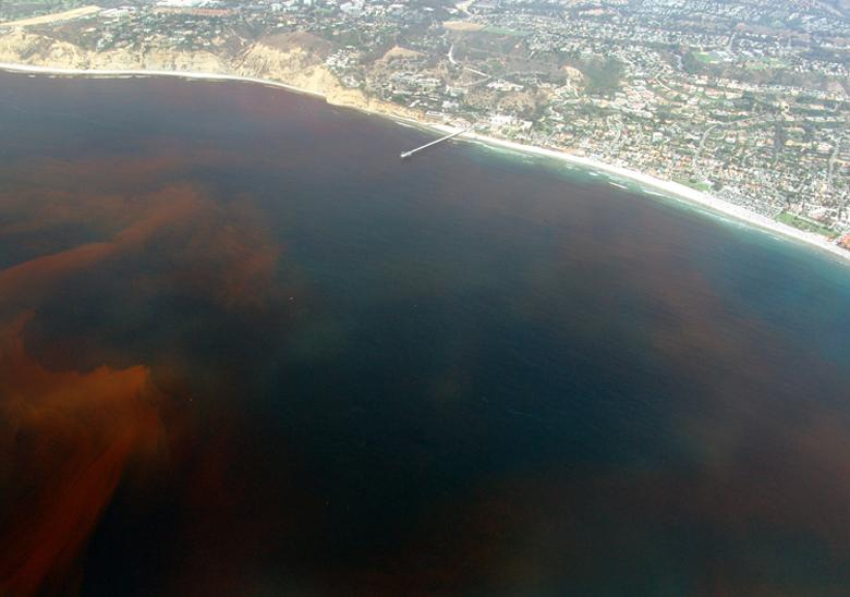 Aerial view of red tide off La Jolla, California