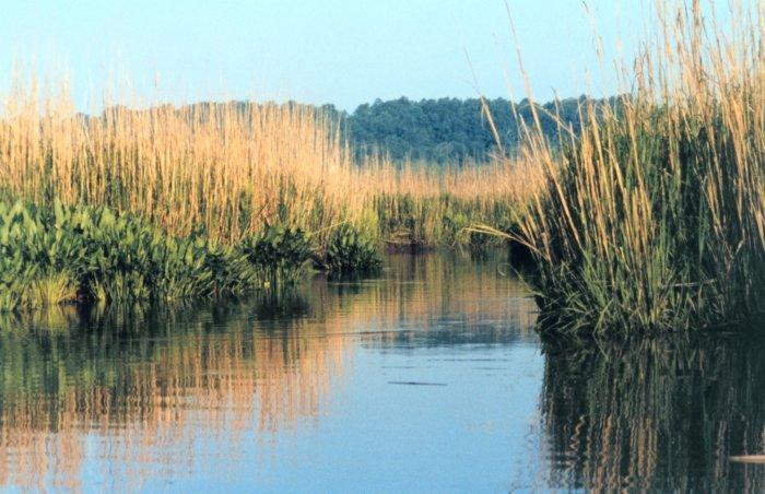 Photo of wetlands