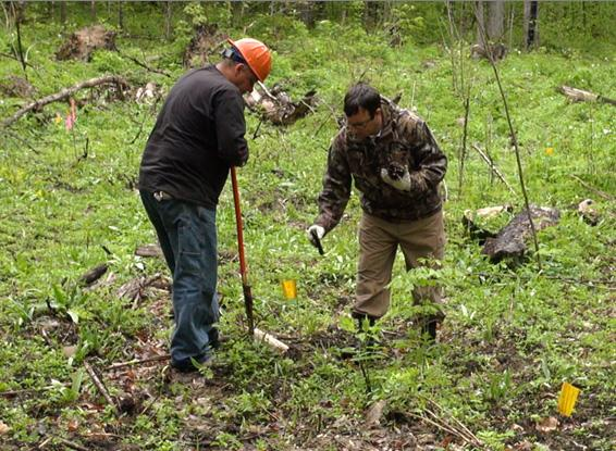 Two men planting tree seedlings in the forest.
