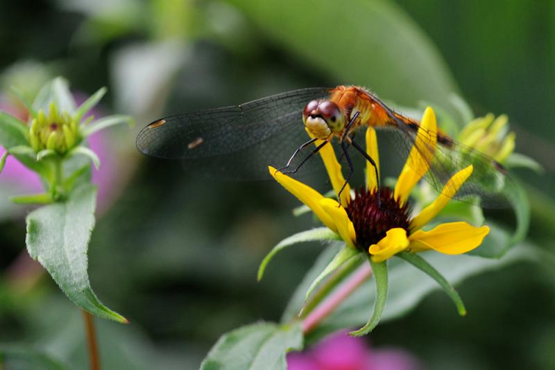 A dragonfly perched on a flower