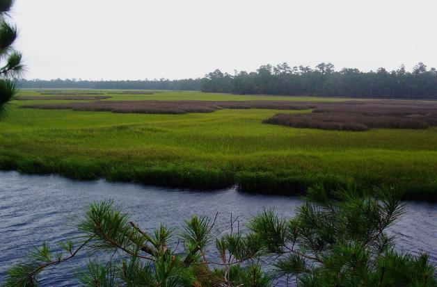 Saltwater Marsh