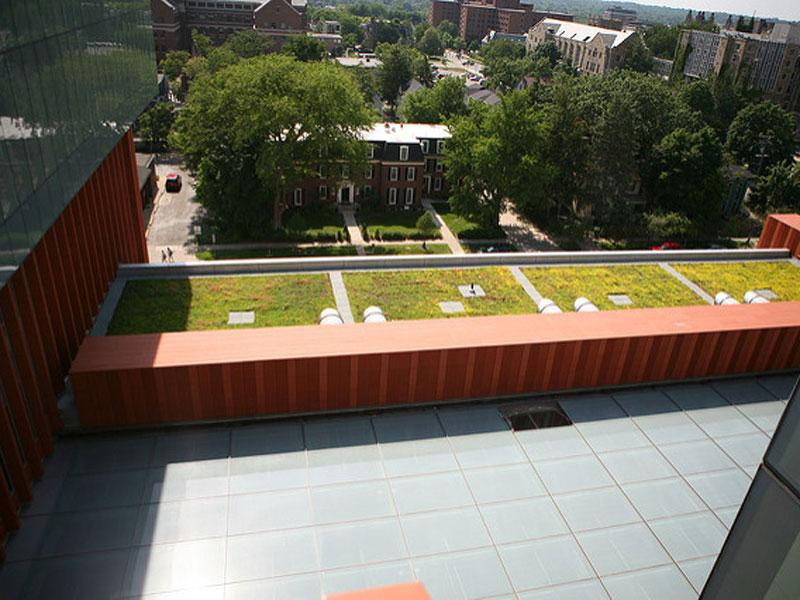 A green roof at the University of Michigan's Ross School of Business