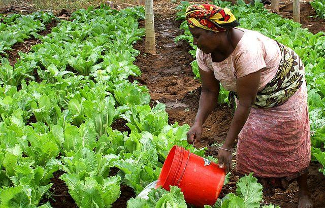 Woman Watering Crops