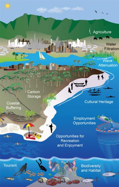 Illustration Depicting Ecosystem Services.