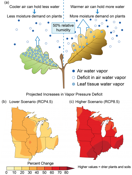 Infographic displaying the effects of projected increases in vapor pressure deficit on plants along with maps showing percentage change in the moisture deficit in the air in the Great Lakes