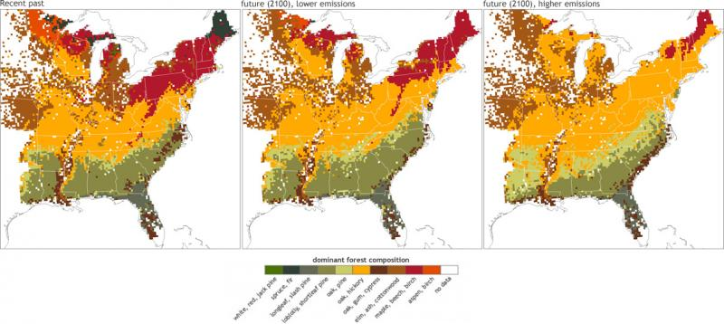 Map Showing Forest Types in the Eastern U.S.