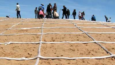 Photo of sand-filled tubes made of biodegradable fabric laid out in a grid on the surface of a sand dune