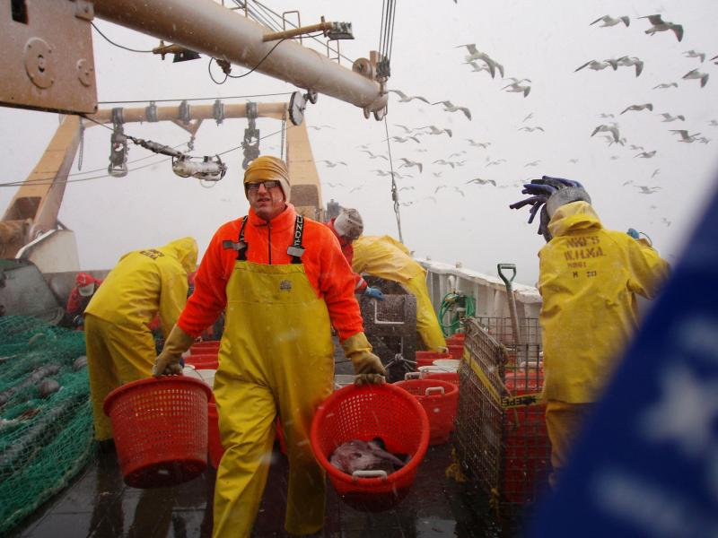 Rubber-suited man carrying baskets of fish on a ship. Seagulls flying in the background.