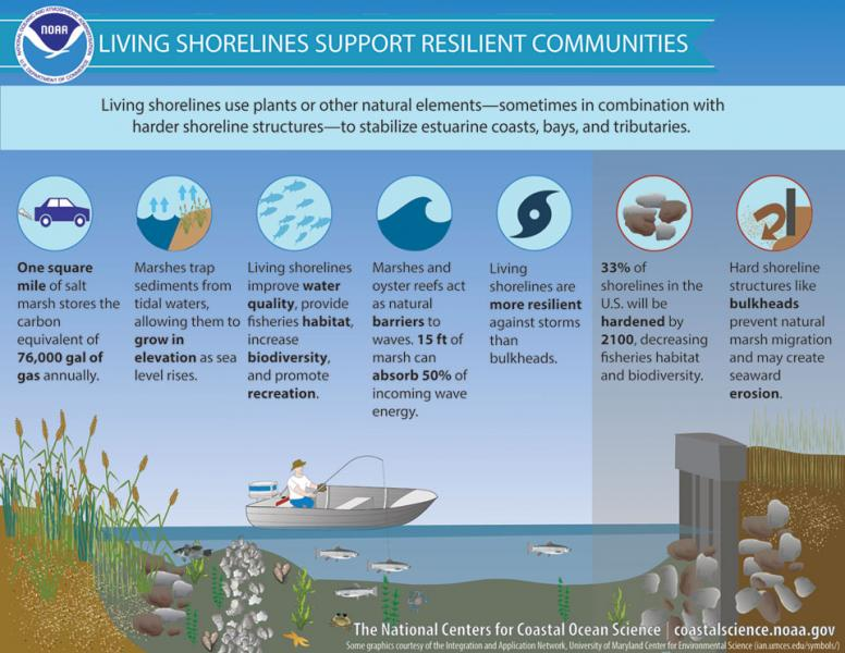 Infographic showing examples of living shoreline