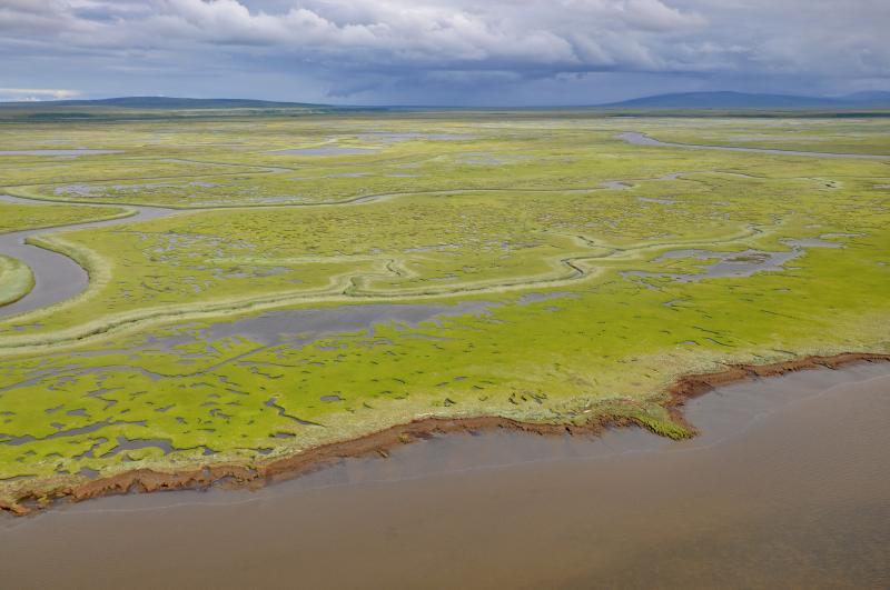Flat, green coastal plain with meandering streams