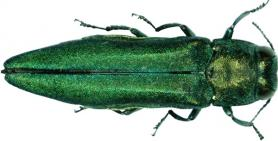 Close-up photo of green beetle