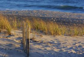 Fence in beach sand