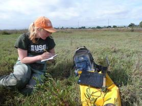 Photo of USGS technician in marsh ecosystem