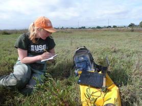 Photo of USGS technician in marsh ecosystem