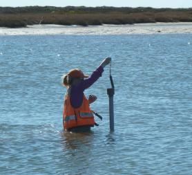 Photo of a technician waist-deep in water