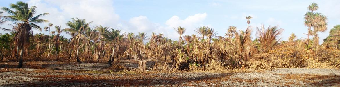Dry, brown drought-stricken tropical vegetation