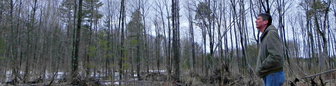 Standing man looking at a stand of trees in a forest