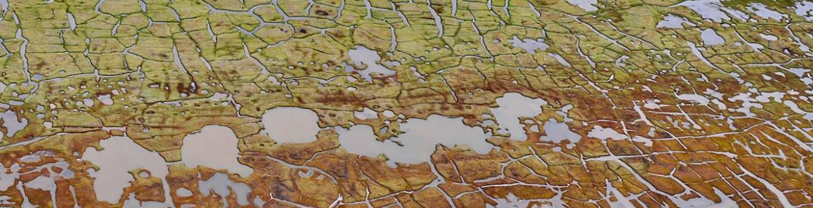 Ice wedges thaw along fracture lines of a tundra surface and water accumulates in small thaw lakes.