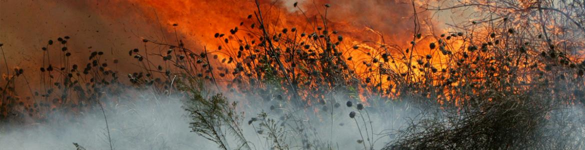 Santa Ana winds carried a fire across Camp Pendleton's Las Pulgas area on September 28, 2005. The brush fire consumed 1,250 acres of the base's open land.