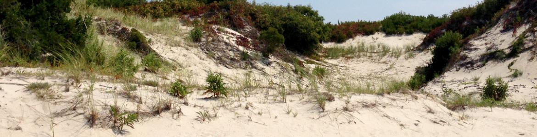 Dunes at Island Beach State Park